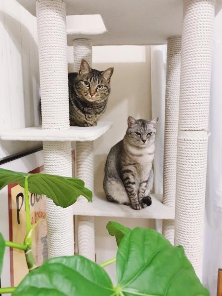 なんとなく気まずそうな猫たち。