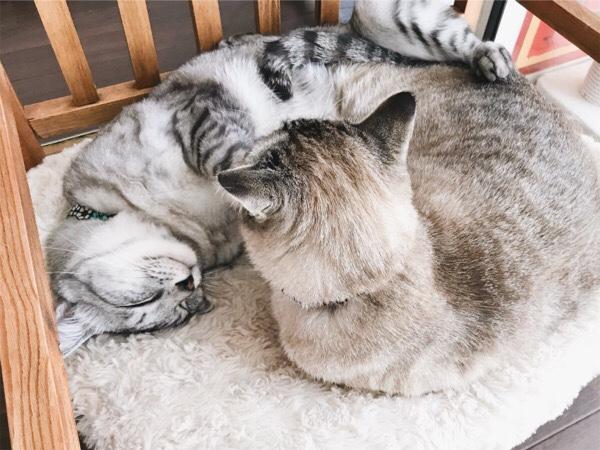 せまいベッドで仲良くお昼寝。