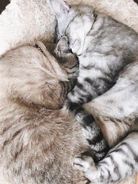 抱き合って寝ている猫たち。