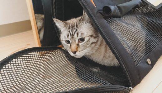 猫3匹と引越し 〜1日目・2日目〜