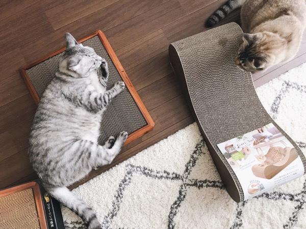 爪とぎの上に寝そべっているテト(サバトラ猫)。