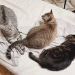 暑苦しいオス猫とクールなメス猫