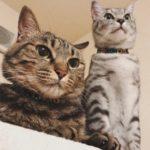 やはりナワバリが変わるという事は猫にとっては一大事らしい