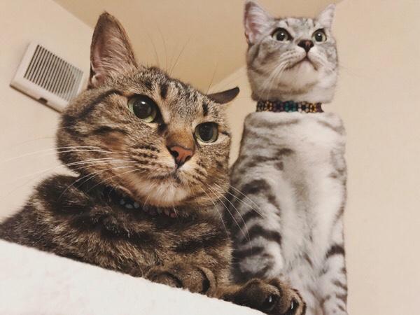 ジーナ(キジトラ猫)とテト(サバトラ猫)の2ショット。