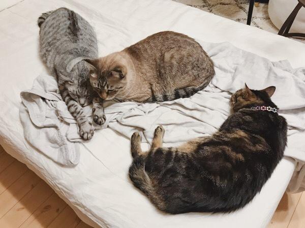 オス猫2匹組とメス猫1匹に分かれた。