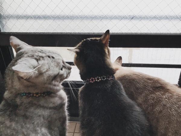 隣にいるジーナ(キジトラ猫)を見ているテト(サバトラ猫)。