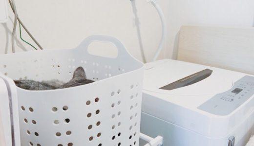 猫のお気に入りの移り変わりは早い
