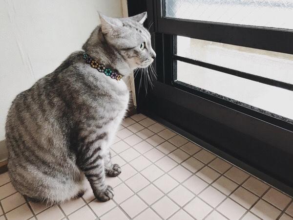 初めて台風を目の当たりにしたテト(サバトラ猫)。