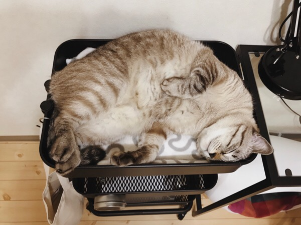 猫の寝床にちょうどいいIKEAのワゴン。