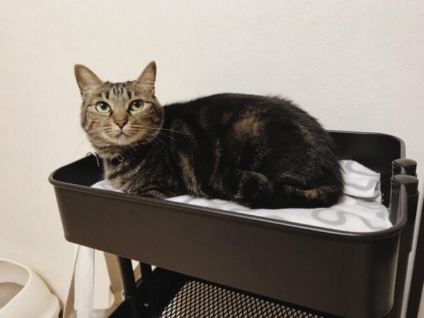 小柄なジーナ(キジトラ猫)なら余裕のあるスペース。