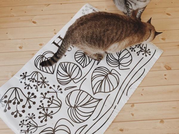 床に広げたウォールステッカーを踏んづけてるムク(シャムトラ猫)。