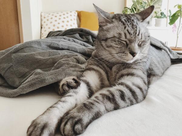 何の変哲も無い猫の日常写真。