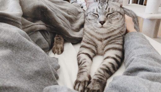 毛布をめくれば奴がいる