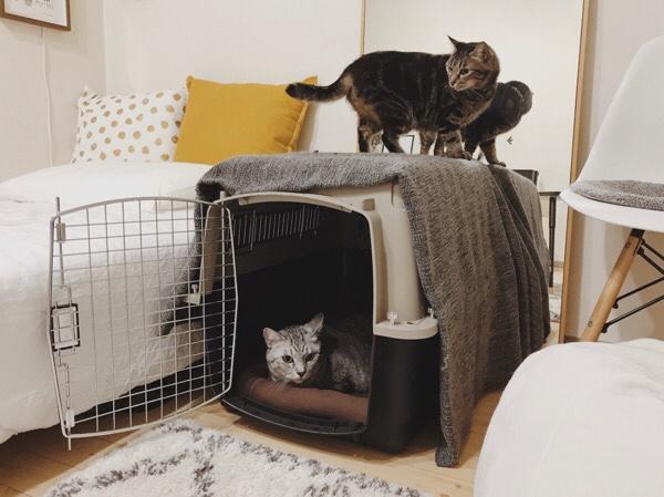 バリケンに集まる猫たち。
