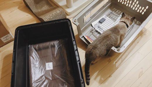開封したウルトラバリケンネルと猫。
