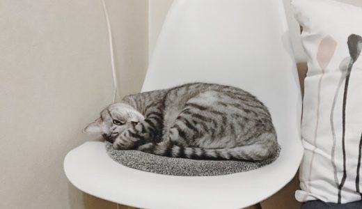 薄目を開けてこちらを見ているテト(サバトラ猫)。