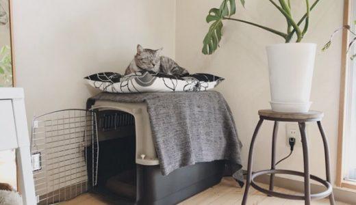 部屋の隅に置いたバリケンの上にいるテト(サバトラ猫)。