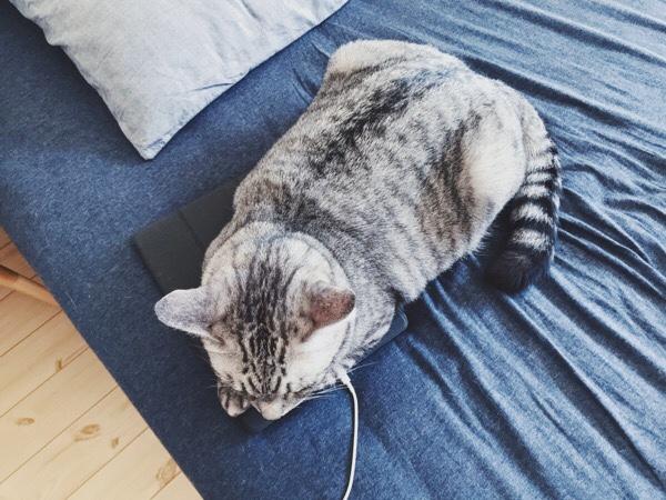 iPadに覆い被さっているテト(サバトラ猫)。