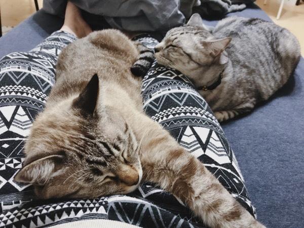 リラックスしてぐで〜っとなってる猫たち。