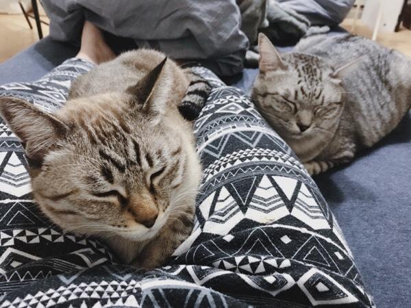 飼い主で暖をとる猫たち。