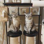 猫と暮らす方におすすめのゴミ箱