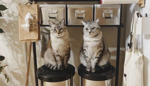 猫と暮らす方におすすめの臭いが漏れないゴミ箱