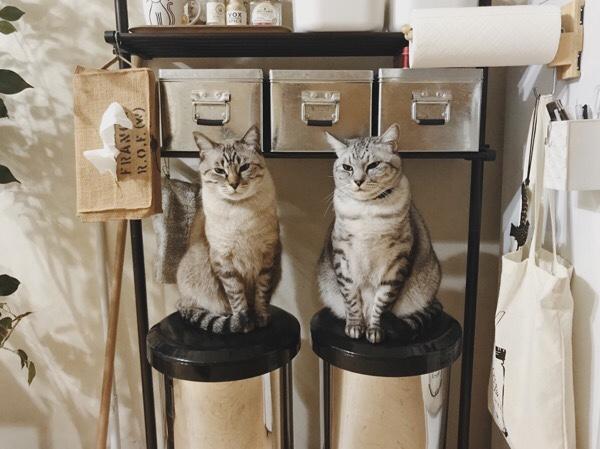 ゴミ箱のふたの上にちょこんと座っている2匹の猫。