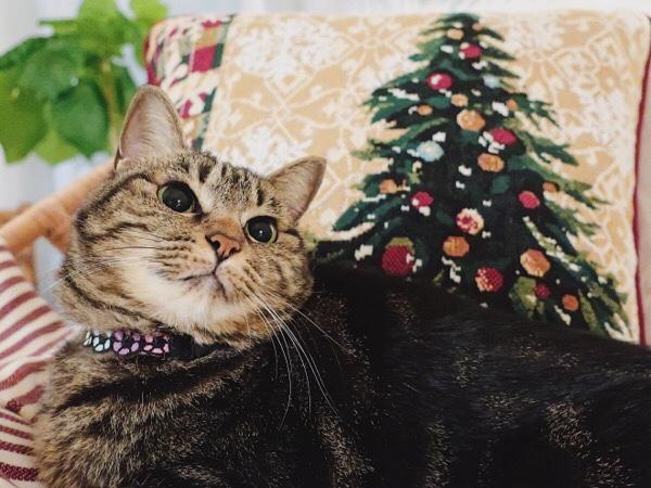 クリスマスっぽい雰囲気。