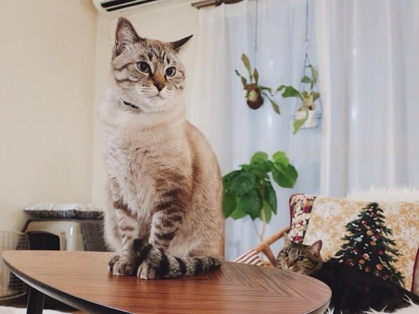 冬毛でモコモコな猫。