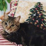 クリスマスツリーが描かれたクッションカバーと猫。