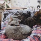飼い主の周りに集まってきた3匹の猫たち。