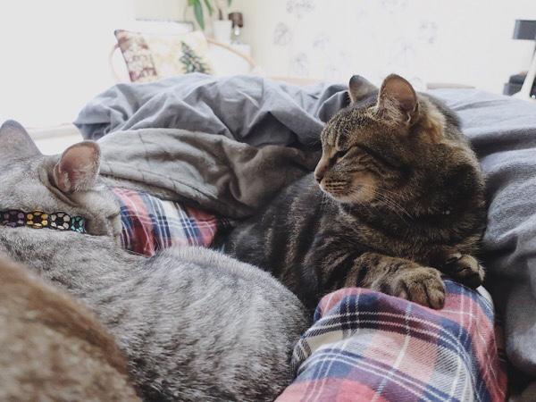 横にいるテト(サバトラ猫)の様子をうかがっているジーナ(キジトラ猫)。