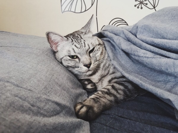寝起きで目つきが悪い。