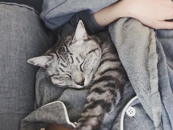 ニンゲンと一緒にふとんの中で寝ているテト(サバトラ猫)。