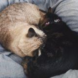 珍しい組み合わせの猫団子。
