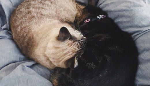 人肌のぬくもりは猫にとって貴重な熱源
