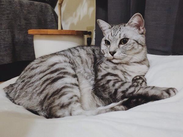 一人になったテト(サバトラ猫)。