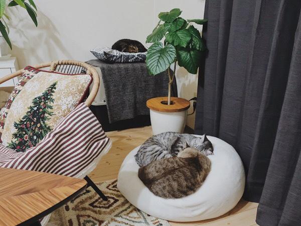 それぞれのベッドで眠る猫たち。