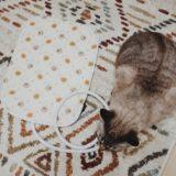 ペット用ホットカーペットとムク(シャムトラ猫)の比較。