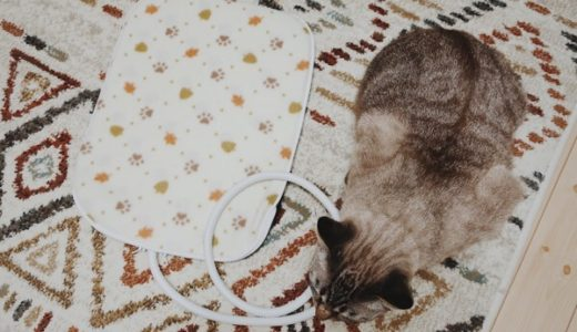 【悲報】猫用ホットカーペット、ガン無視される