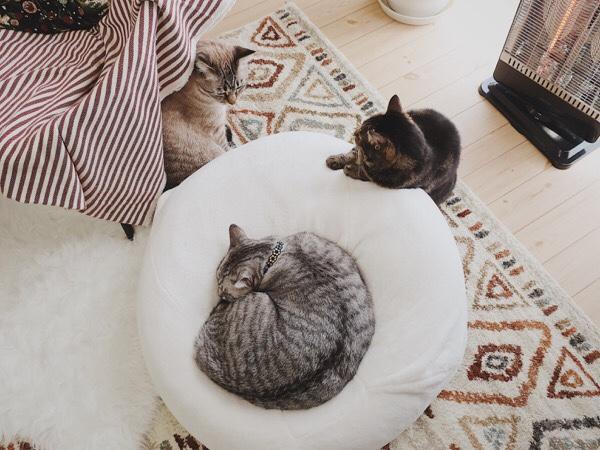 ヒーターの前でくつろぐ猫たち。