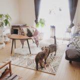 猫と暮らすワンルームの部屋。