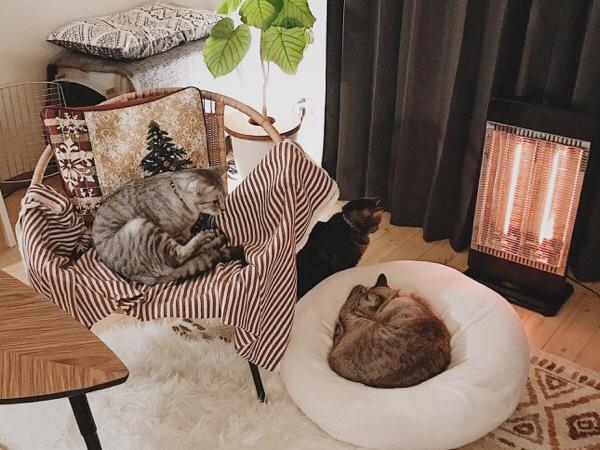 夜の部屋と猫たち。