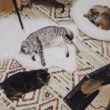 ヒーターの前でだらけている猫たち。