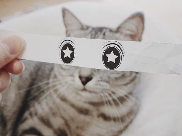 猫モンタージュでキラキラおめめになったテト(サバトラ猫)。