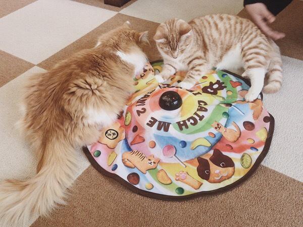 キャッチミーイフユーキャンで遊ぶ親子猫。