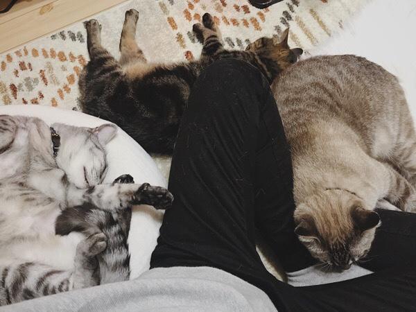 飼い主のまわりに集まって寝ている3匹の猫。