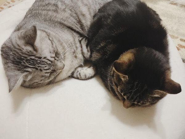 テト(サバトラ猫)とジーナ(キジトラ猫)の丸い頭。