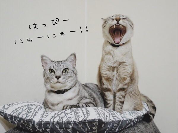 あけおめ猫写真。