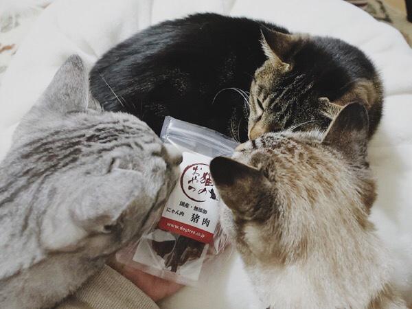 猪肉のおやつに群がる猫たち。